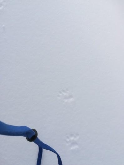 可愛い雪上の足跡_e0356469_22050753.jpg