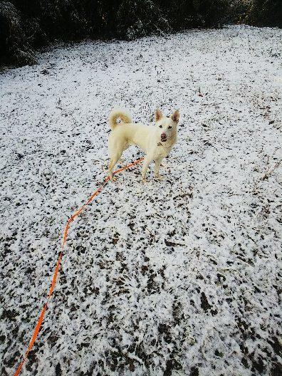 雪きらめく朝_e0303187_20032280.jpg