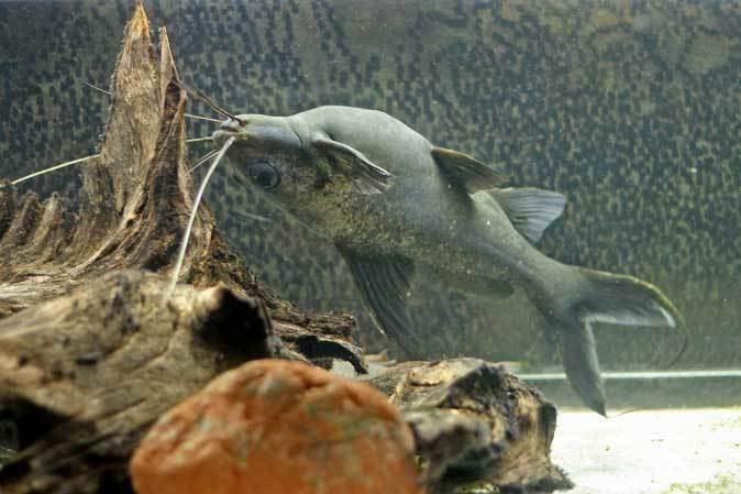 東京タワー水族館~アジア・オセアニア熱帯魚エリアの多彩な生物たち_b0355317_21041155.jpg