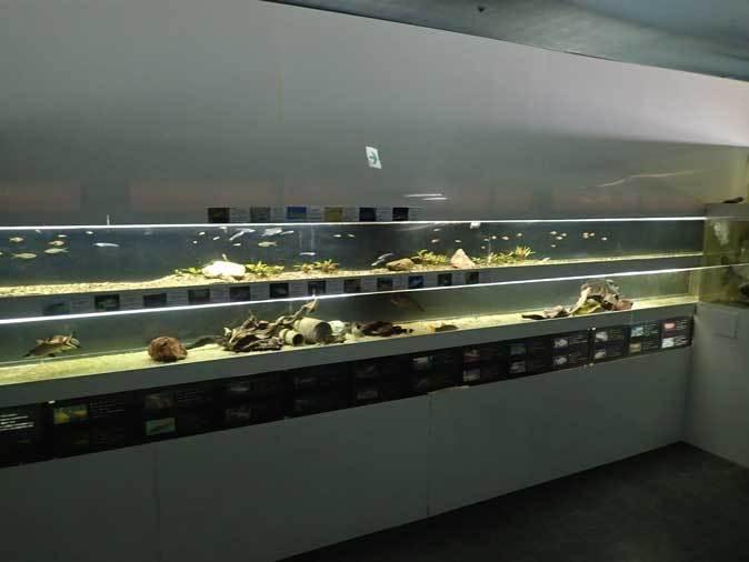 東京タワー水族館~アジア・オセアニア熱帯魚エリアの多彩な生物たち_b0355317_21060793.jpg
