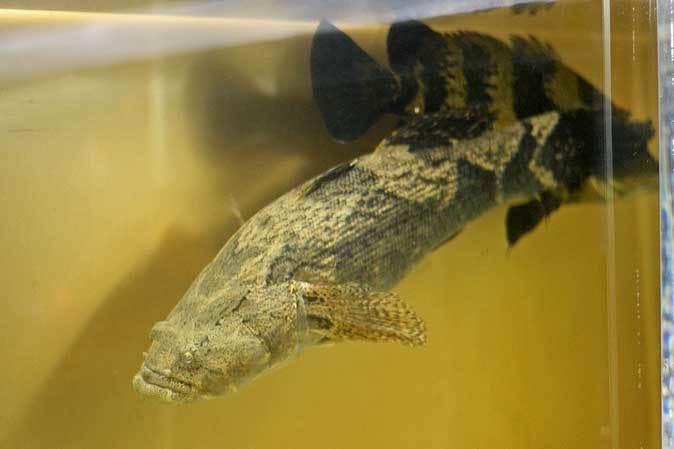 東京タワー水族館~アジア・オセアニア熱帯魚エリアの多彩な生物たち_b0355317_21093516.jpg