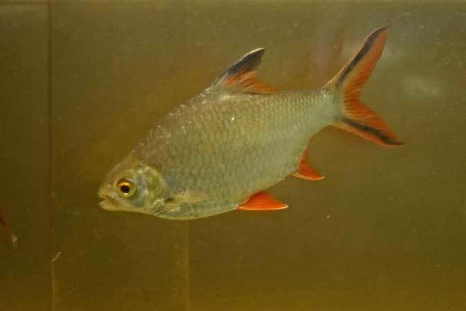 東京タワー水族館~アジア・オセアニア熱帯魚エリアの多彩な生物たち_b0355317_21224041.jpg