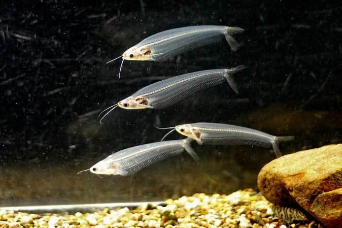 東京タワー水族館~アジア・オセアニア熱帯魚エリアの多彩な生物たち_b0355317_21300650.jpg