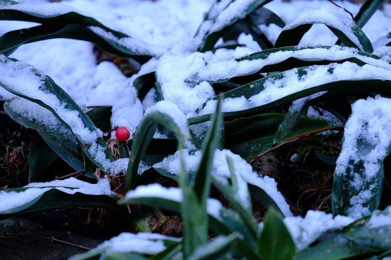 初雪残雪ー2_b0230131_08483260.jpg