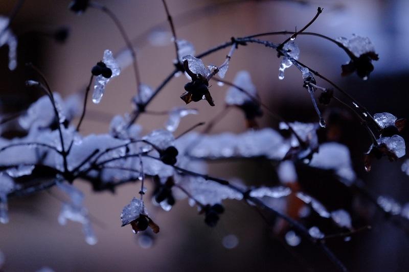 初雪残雪ー3_b0230131_08565697.jpg