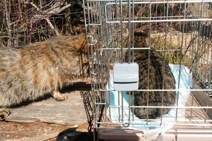 城山の猫の、全頭避妊が終わりました_c0038434_13433406.jpg