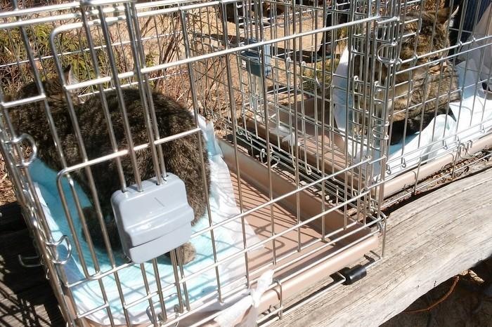 城山の猫の、全頭避妊が終わりました_c0038434_13433813.jpg