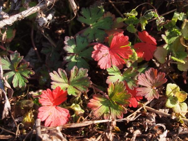 冬の植物観察会_b0135573_08214059.jpg
