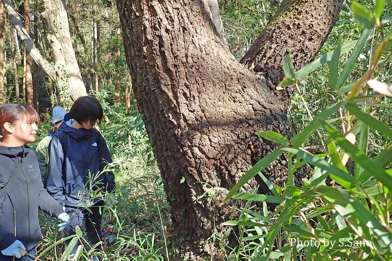 朝比奈の森の知られざる道_b0348205_11424486.jpg