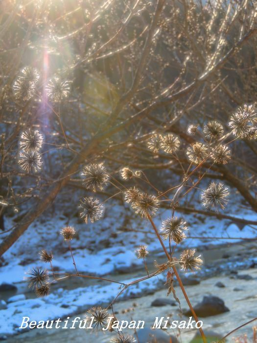 冬の彩り。☆、・:`☆・・゚・゚☆。。_c0067206_16013845.jpg