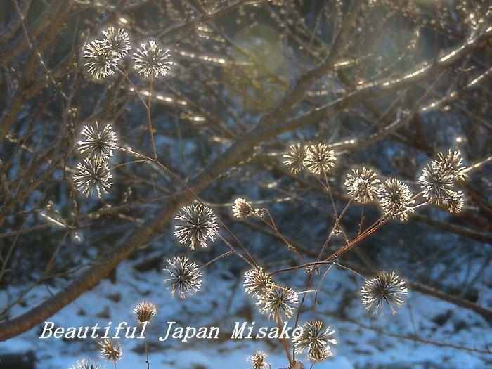 冬の彩り。☆、・:`☆・・゚・゚☆。。_c0067206_16014566.jpg