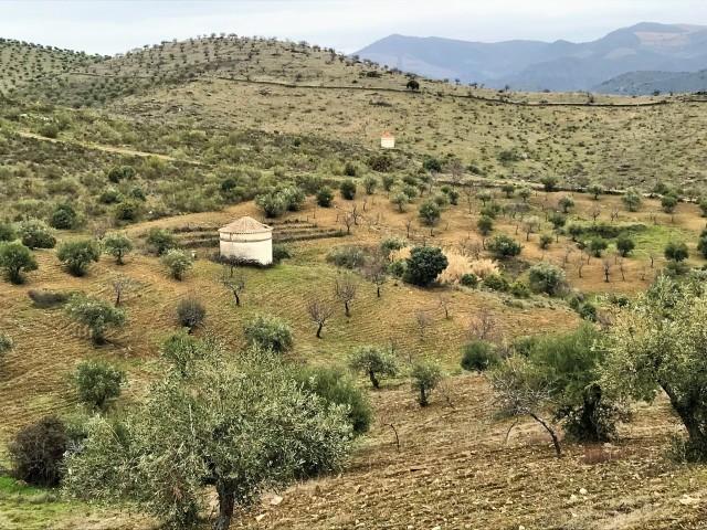 ポルトガルのCARM農園へ_c0213220_02540040.jpg