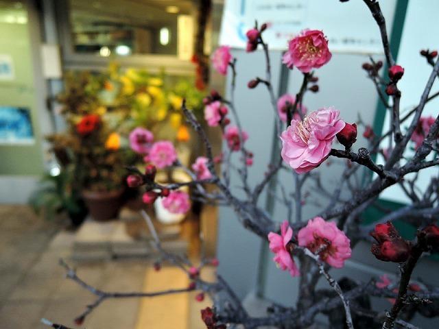 春が来る_c0062832_18000809.jpg