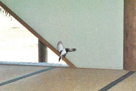 「鬼は外!」「鳥は内?」_a0123836_14153844.jpg
