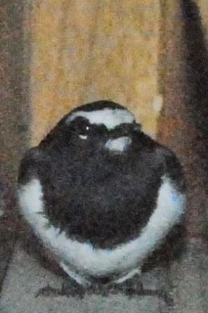 「鬼は外!」「鳥は内?」_a0123836_14154788.jpg