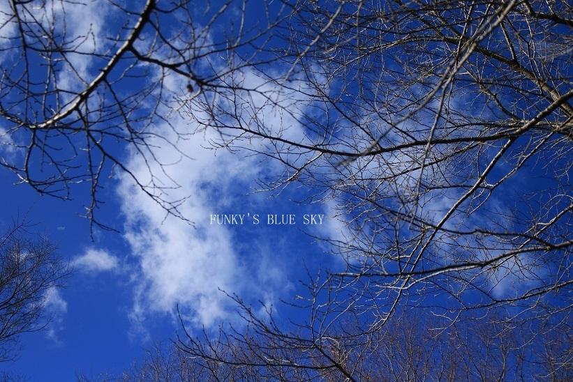 山道散歩♪・後編_c0145250_09481676.jpg