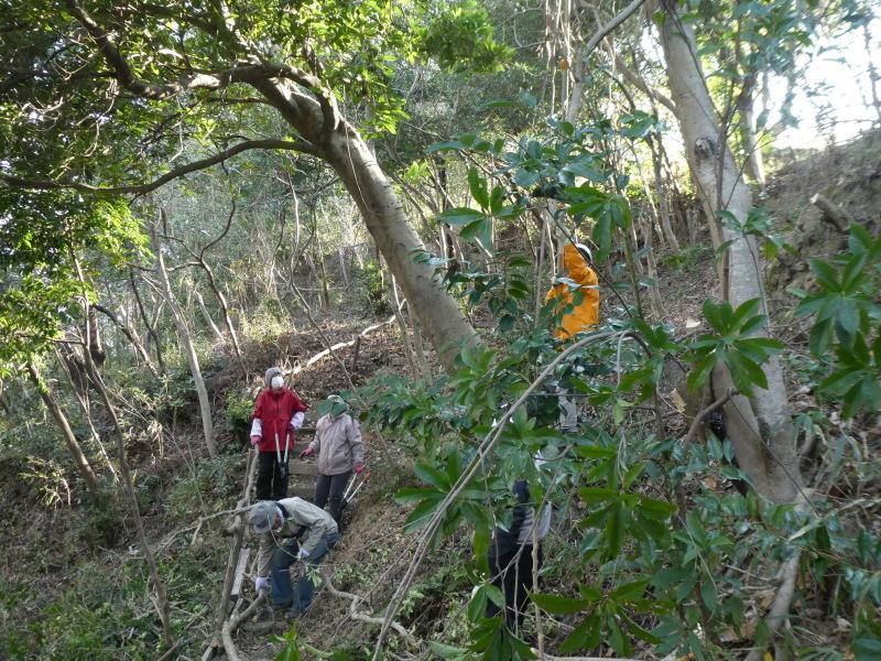 木の伐採は楽しい・・・うみべの森_c0108460_16383229.jpg