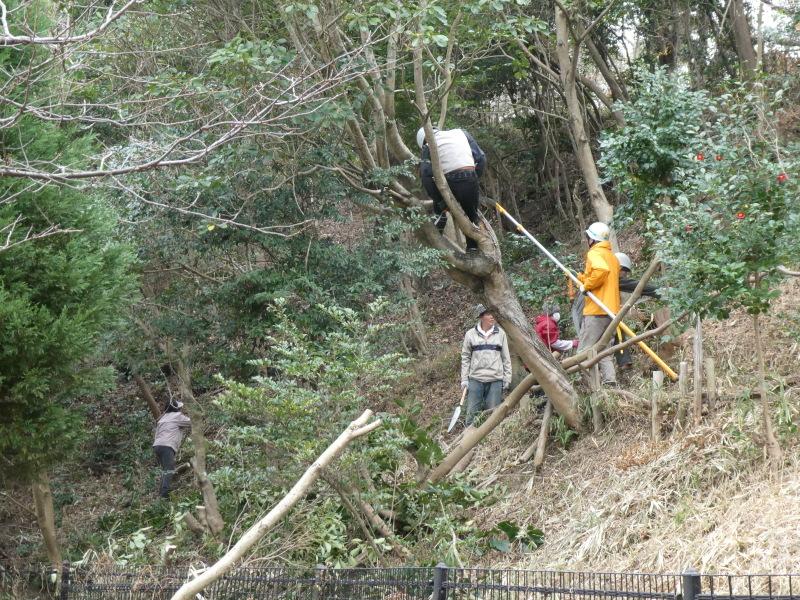 木の伐採は楽しい・・・うみべの森_c0108460_16404845.jpg