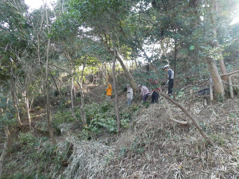 木の伐採は楽しい・・・うみべの森_c0108460_16404906.jpg
