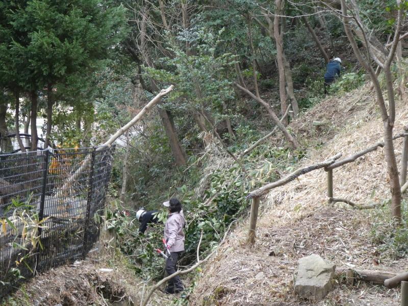 木の伐採は楽しい・・・うみべの森_c0108460_16431378.jpg
