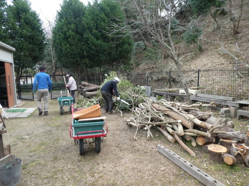 木の伐採は楽しい・・・うみべの森_c0108460_16440561.jpg