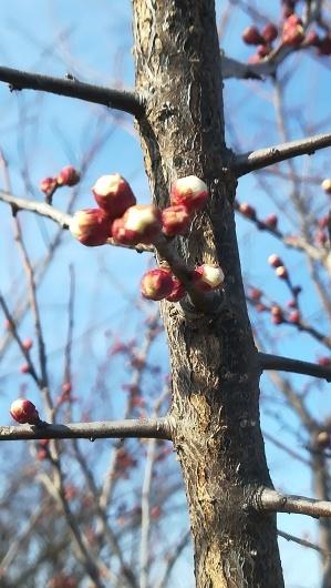 春の陽気の畑仕事_e0356469_20082181.jpg