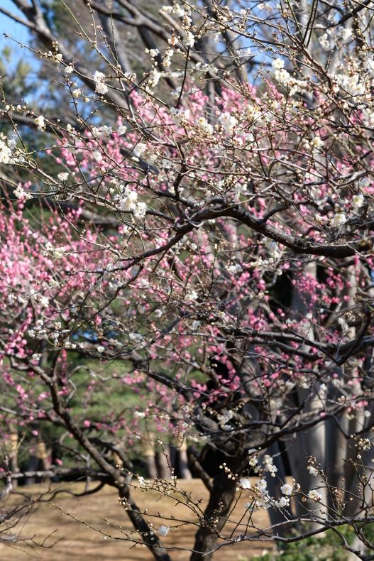 立春に春一番か・・・_b0391989_23242520.jpg