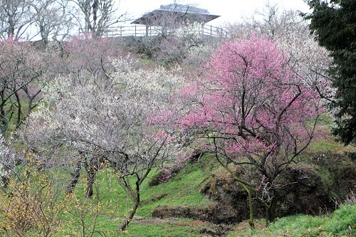 春が来た!_a0333195_20273553.jpg