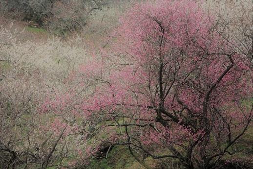 春が来た!_a0333195_20274417.jpg