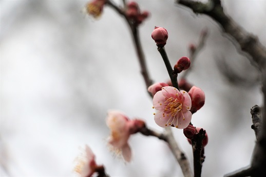 春が来た!_a0333195_20275144.jpg