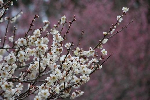 春が来た!_a0333195_20275861.jpg