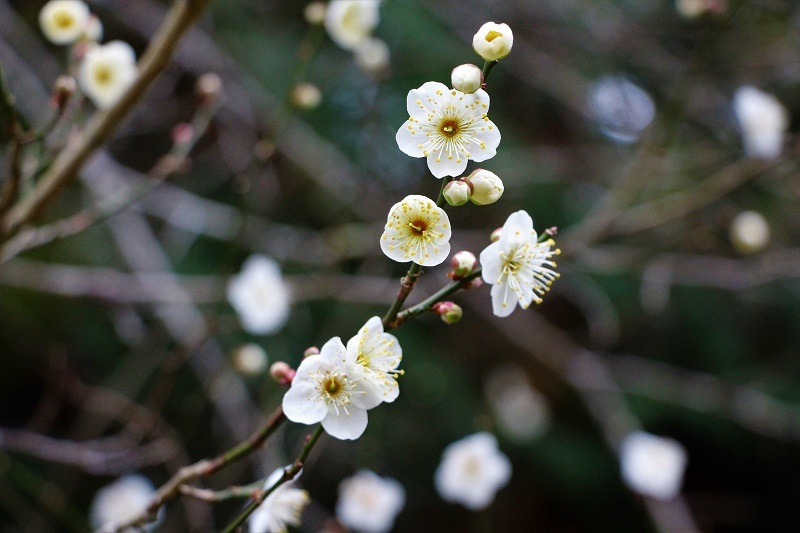 春が来た!_a0333195_20374318.jpg