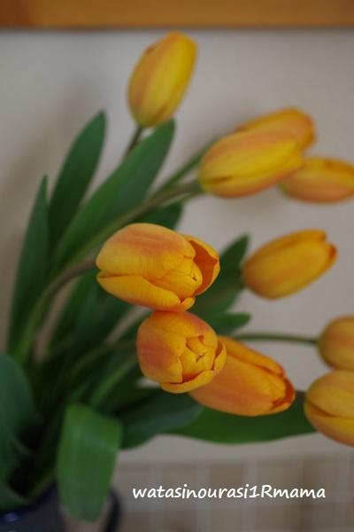立春と旅人からの写真   ミュンヘン_c0365711_14213566.jpg