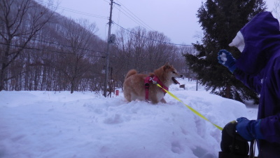 2月4日 月曜 小雨のち小雪  2度_f0210811_10263653.jpg