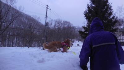 2月4日 月曜 小雨のち小雪  2度_f0210811_10270886.jpg