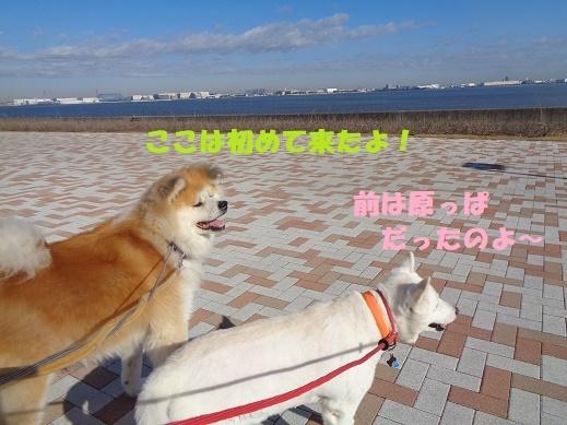 f0121712_23281927.jpg