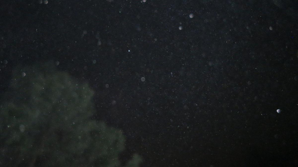 春雨にはまだ早いのに・・・と思った9月3日の雨(笑)_c0331825_20374692.jpg
