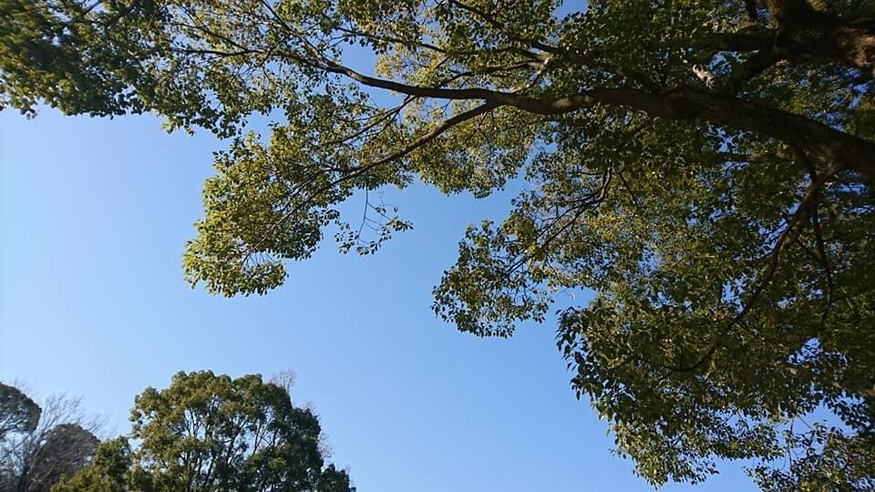 朝一番で東山植物園!!_f0373339_15164698.jpg