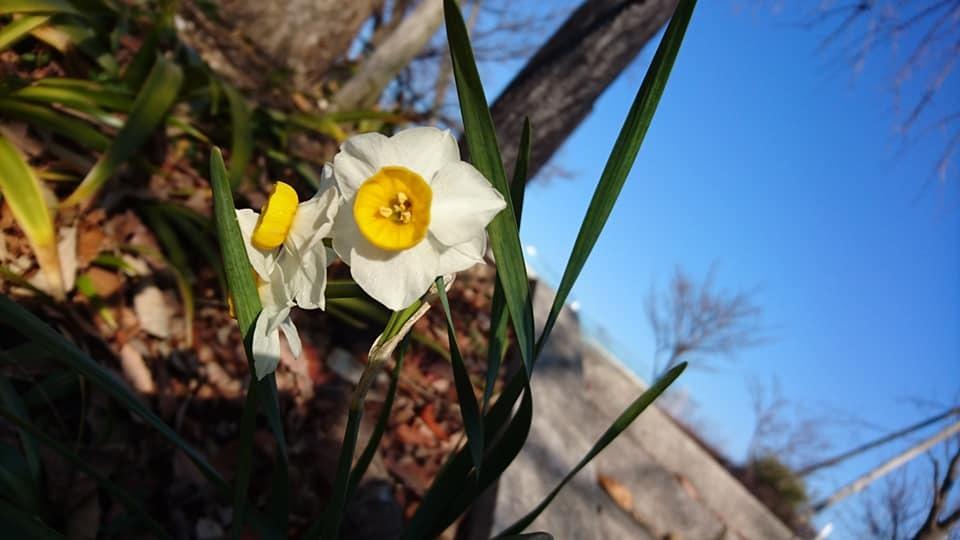 朝一番で東山植物園!!_f0373339_15171460.jpg