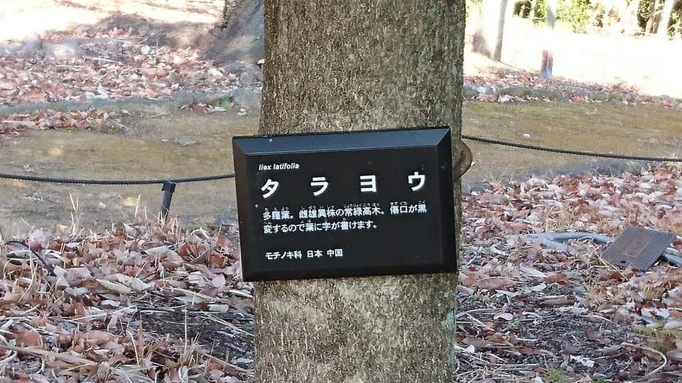 朝一番で東山植物園!!_f0373339_15195794.jpg