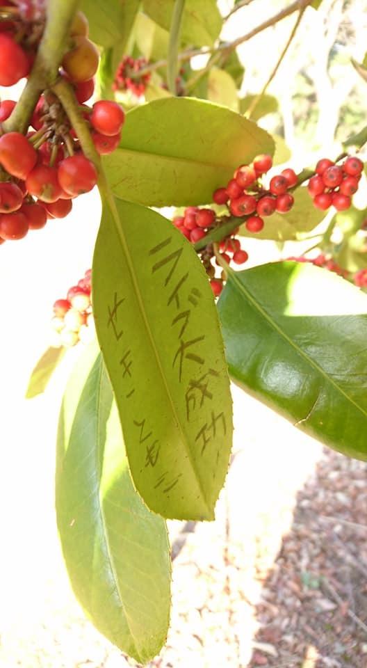 朝一番で東山植物園!!_f0373339_15231429.jpg