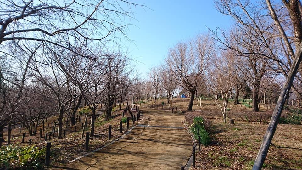 朝一番で東山植物園!!_f0373339_15235424.jpg