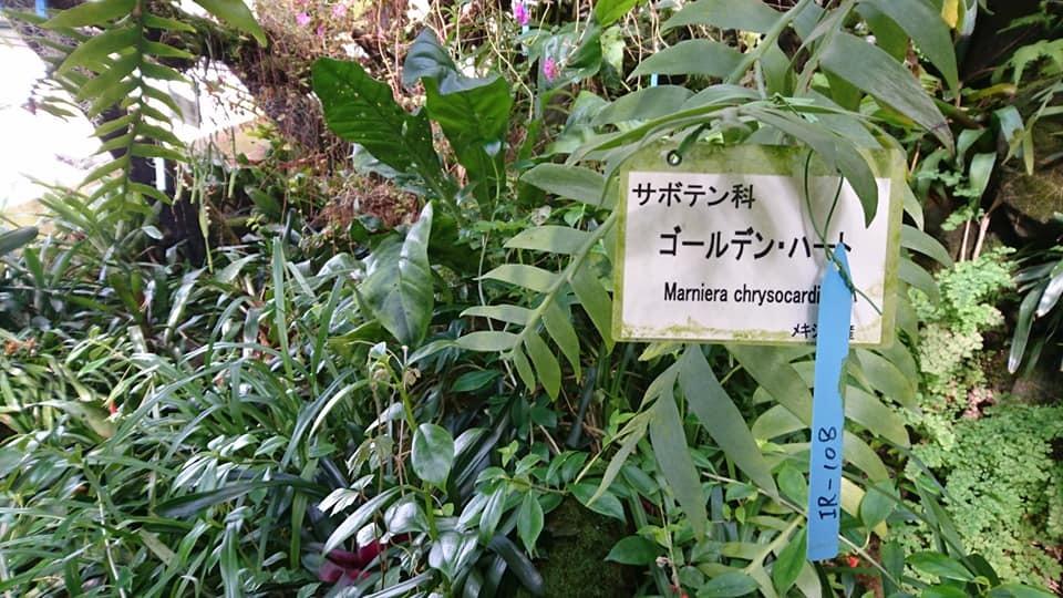 朝一番で東山植物園!!_f0373339_15253542.jpg