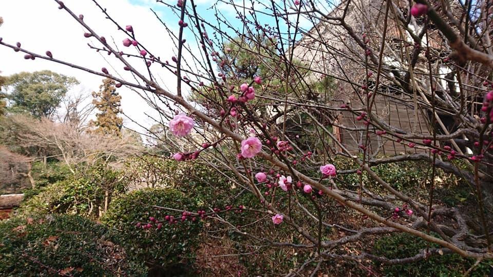 朝一番で東山植物園!!_f0373339_15272359.jpg