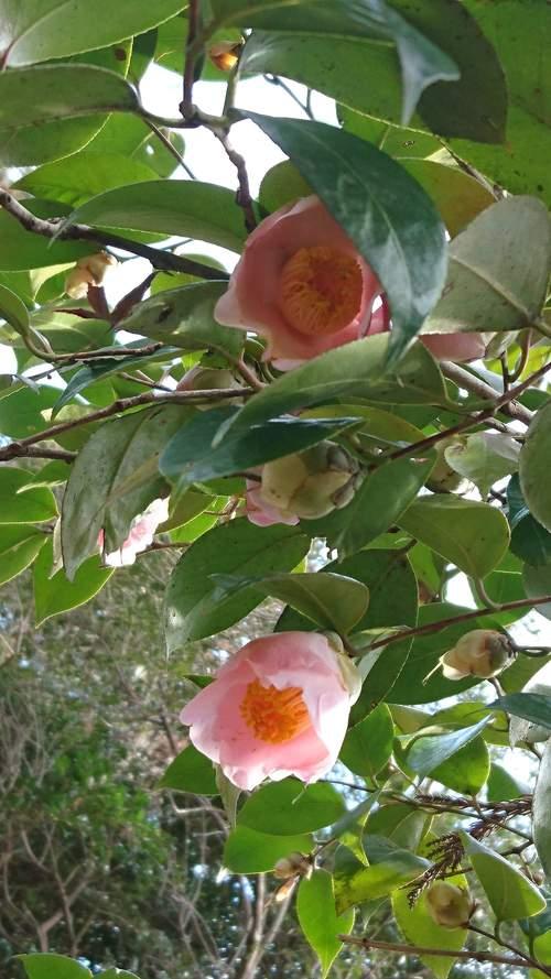 朝一番で東山植物園!!_f0373339_1582727.jpg