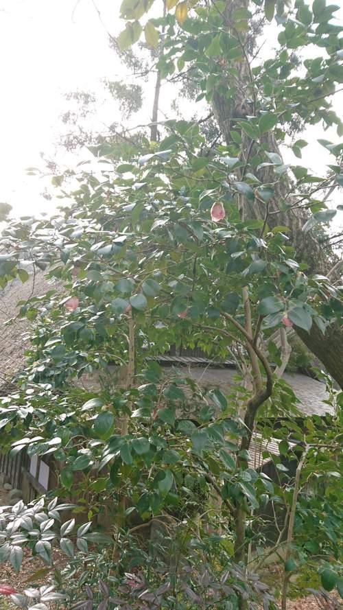 朝一番で東山植物園!!_f0373339_158276.jpg