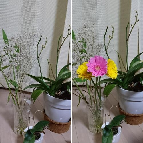 お花のある生活_f0373339_18543873.jpg