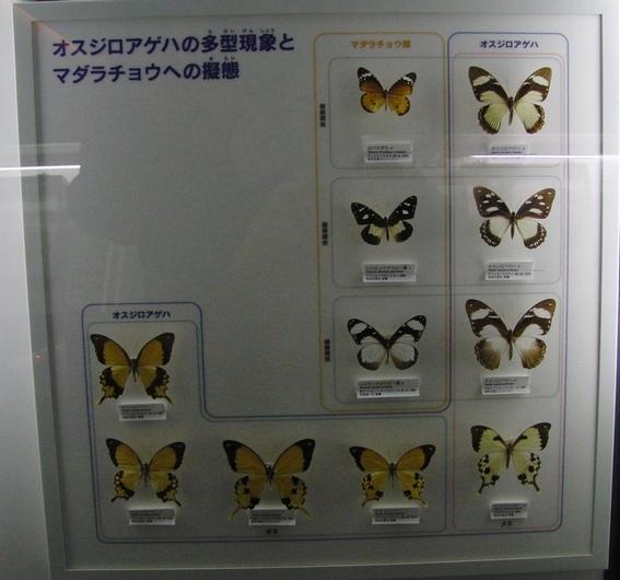 c0065260_19455983.jpg