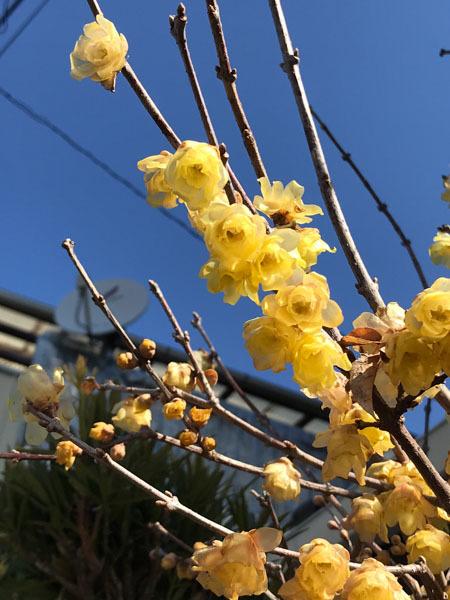 梅と桜_d0068664_14233822.jpg