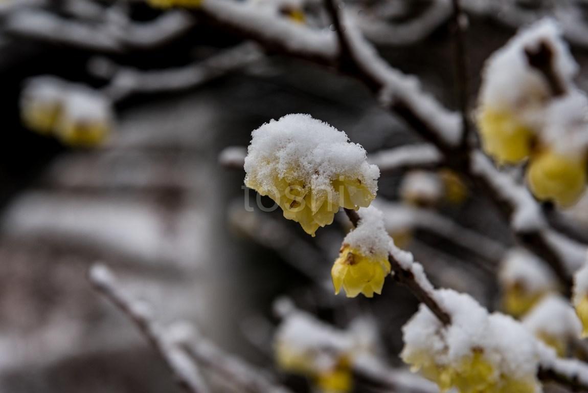 雪の多武峰と細川_c0350572_22004070.jpg